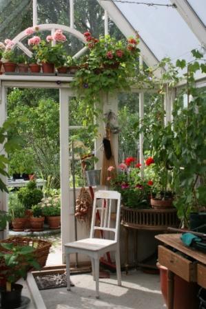 Tyras trädgård växthuset
