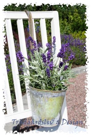 Lavendelstol