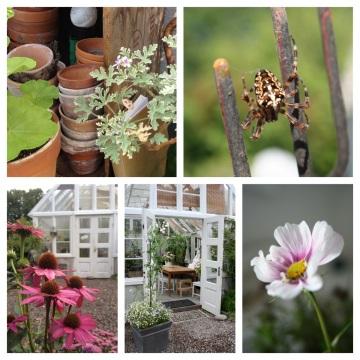 Bilder på mitt Växthusliv